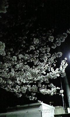 2010年の夜桜_上尾某所にて