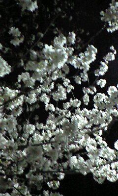2010年の夜桜_むむっピンボケだぁ(>_<)